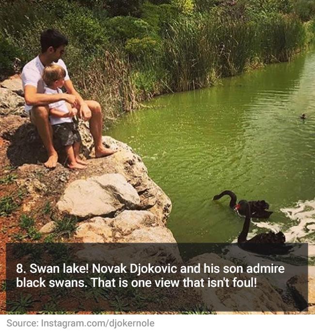 8-djokovic-swans